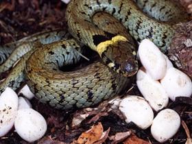 蛇类写真图片