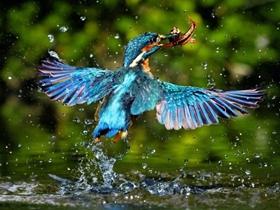 唯美好看的翠鸟摄影图片