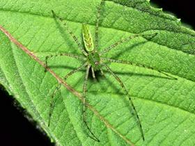 蜘蛛特写图片