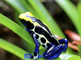 多色青蛙图片
