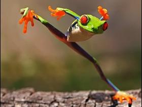 充满个性青蛙照片图片