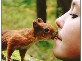 超萌的松鼠图片