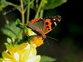 花蝴蝶图片