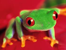 青蛙生活图片