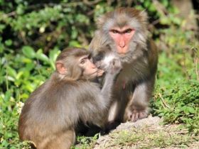 猴子们的乐趣图片