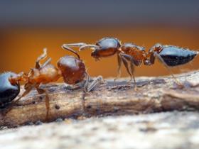 微距蚂蚁图片