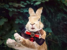 萌宠兔子图片