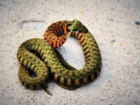 彩色蛇图片