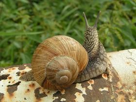 蜗牛的高清图片
