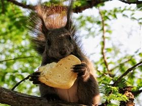 可爱松鼠图片