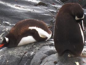 南极企鹅图片
