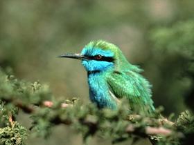 翠鸟的图片