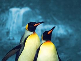 企鹅的图片