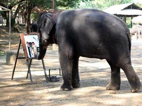 灵性的大象