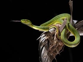 青蛇起舞弄青影