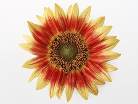 向日葵花朵图片
