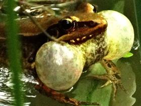 青蛙叫声阵阵