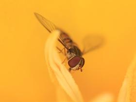辛勤的蜜蜂幼虫