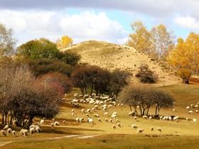 乌兰布统草原牧羊