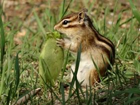 小松鼠的幸福生活