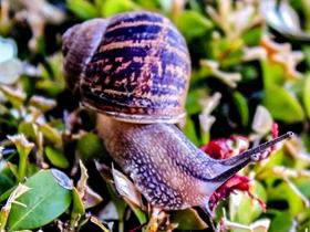 蜗牛慢慢爬