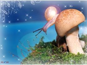 蝸牛的童话