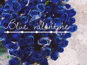 高清蓝玫瑰花束图片