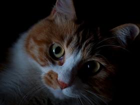 秋夜中的大脸猫