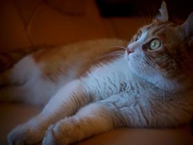 电影镜中的大脸猫