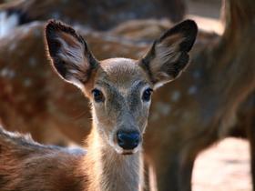 鹿回头图片