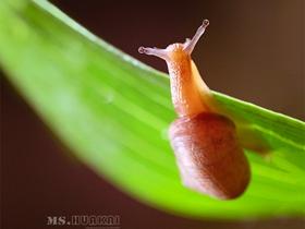 蜗牛爱美丽