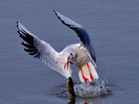 鸟类的慢动作