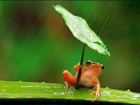 树蛙撑叶子伞遮风挡雨
