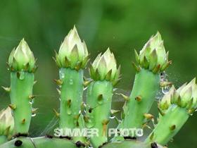 仙人掌的嫩芽图片