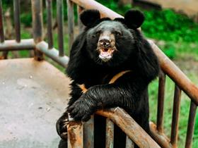 萌萌的大黑熊图片