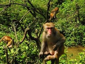 龙虎山观猴