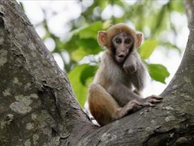 龙虎山观猴子