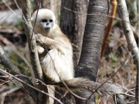 小猴顽皮可爱