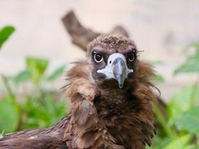 一组秃鹫图片