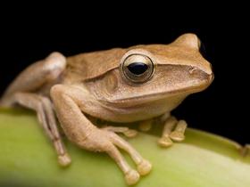 丛林小精灵树蛙