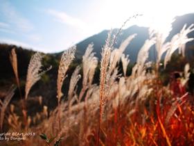 寻找秦岭山里的芒草