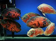 水族馆里的精品地图鱼图片