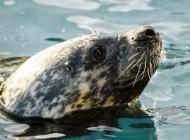 海豹图片大全 可爱的小海豹