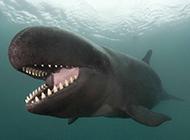 可爱逗人的大鲸鱼图片