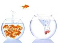 生动的金鱼唯美图片