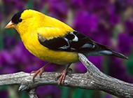 精品白玉鸟羽翼丰满图片
