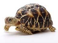 可爱小乌龟高清图片