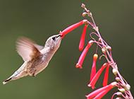 超可爱的细小小蜂鸟图