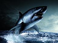 巨型大白鲨鱼牙齿锋利图片