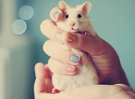 可爱的小白鼠小清新壁纸图片